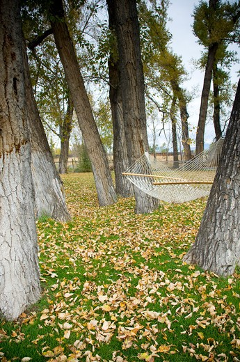 Stock Photo: 4033-354 Hammock in a park, Bozeman, Montana, USA