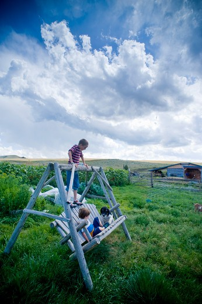 Boys and a dog on a porch swing, Bozeman, Montana, USA : Stock Photo