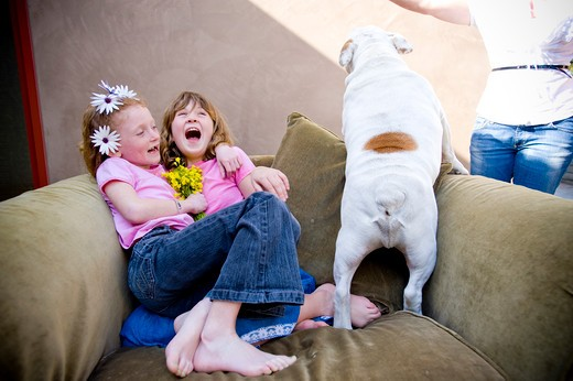 Two girls laughing and playing with a bulldog, San Diego, California, USA : Stock Photo