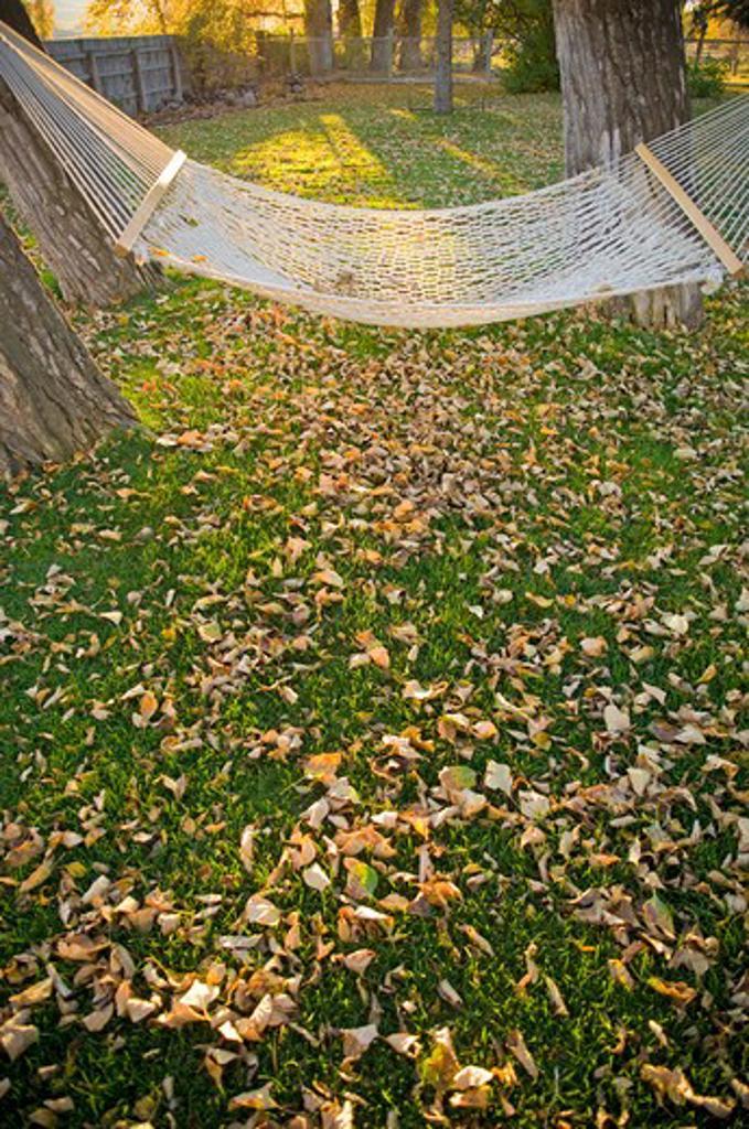 Hammock in a park, Bozeman, Montana, USA : Stock Photo
