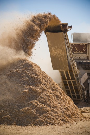 Wood products being processed into wood chips : Stock Photo