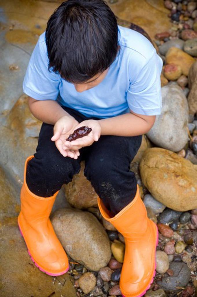 Stock Photo: 4033-432A Boy with a sea slug in his hands