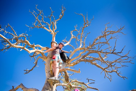 Girls climbing a dead tree, Joshua Tree National Monument, California, USA : Stock Photo