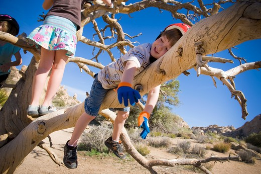 Boy sleeping on a tree branch, Joshua Tree National Monument, California, USA : Stock Photo