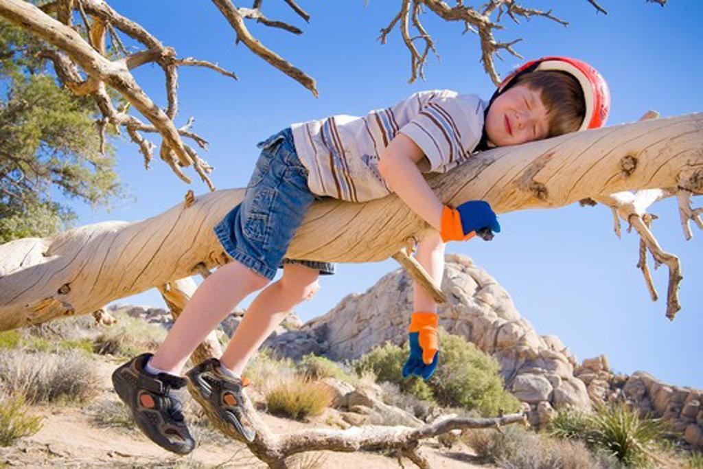 Boy sleeping on a tree branch, Joshua Tree National Monument, California, USA : Stock Photo