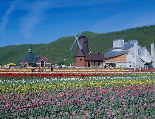 Stock Photo: 4034-104967 tulip park, Kamiyubetsu, Hokkaido, Japan