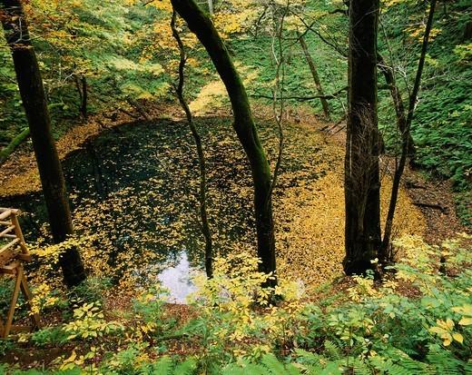 Twelve lakes, Aoike, Tourist, Fukaura, Aomori, Tohoku, Japan : Stock Photo