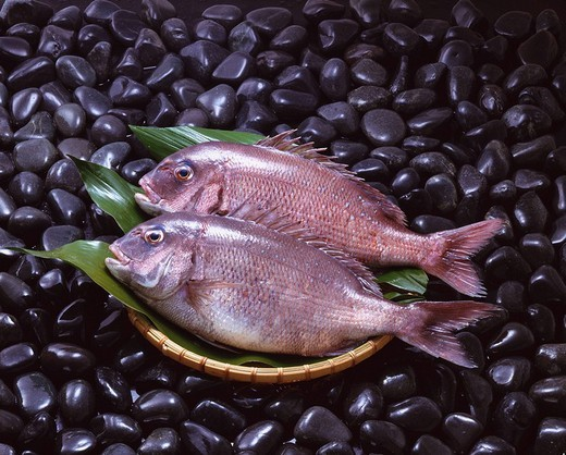 Sea bream Image of a sea bream Stone Colander Leaf Fish Food : Stock Photo