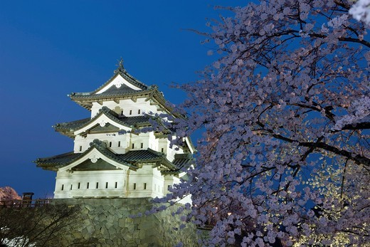 Hirosaki park, Selection of 100 famous place of Cherry blossoms in Japan, Cherry blossoms, Flower, Cherry blossoms in the evening, Castle tower, Hirosaki, Aomori, Tohoku, Japan : Stock Photo