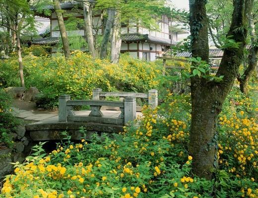 Stock Photo: 4034-119947 Matsuo Taisha Shrine, Japanese kerria, Kyoto, Rakusei, Japan