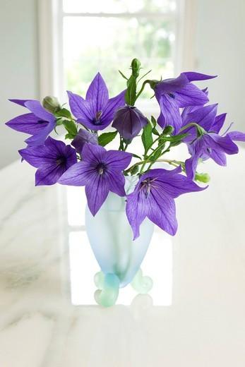 Consept, balloon flower, vase : Stock Photo