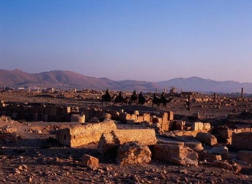 Stock Photo: 4034-124187 Ruin, Morning, Camel, Animal, Palmyra, Syria, Middle East