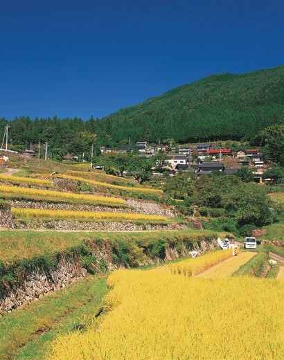 slope case, Rice Terrace, Ena, Gifu, Japan : Stock Photo