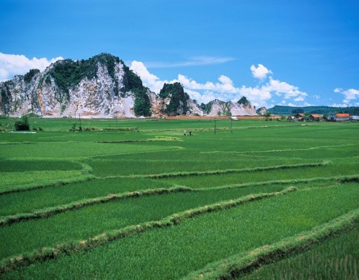 Paddy field White mountain Furlong Vietnam Sky Clouds Mountain Country side Seedling House : Stock Photo