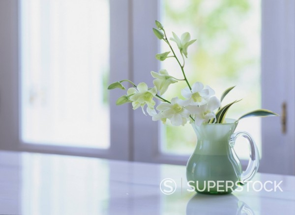 Concept flower plant vase : Stock Photo