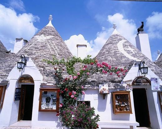 Rose, Trulli, Alberobello, Italy : Stock Photo