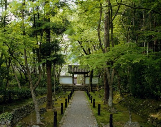 Jizoin Yamato Kyoto Japan Way Tree Green : Stock Photo