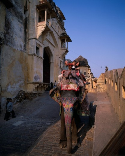 Humbert castle Jaipur Rajasthan India Elephant Animal Vehicle, Transportation : Stock Photo