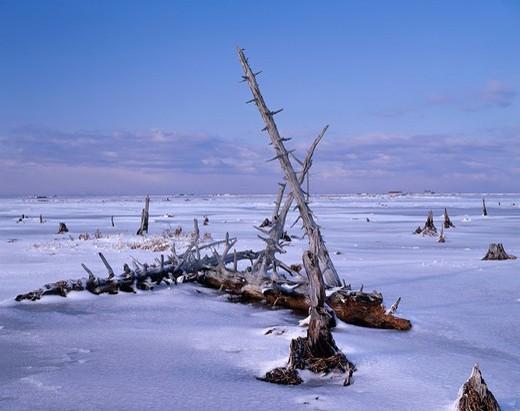 Todowara Winter Bekkai Hokkaido Japan : Stock Photo