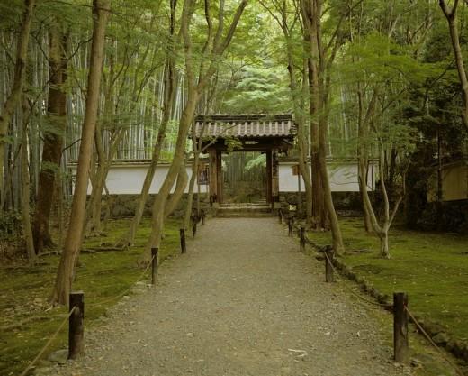 Jizoin temple of bamboo Kyoto Kyoto Japan Takebayashi Way Gate Tree Green temple : Stock Photo