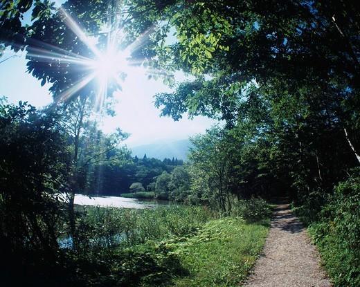Kurohime plateau, Ojika pond, Forest relaxation course, Shinano, Nagano, Japan : Stock Photo