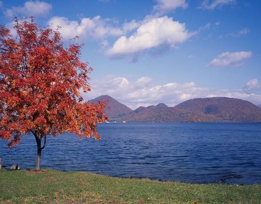 Stock Photo: 4034-25986 Toya lake Lake Red leaves Sorbus commixta Sobetsu Hokkaido Japan Lake Red leaves Tree Mountain Clouds Blue sky
