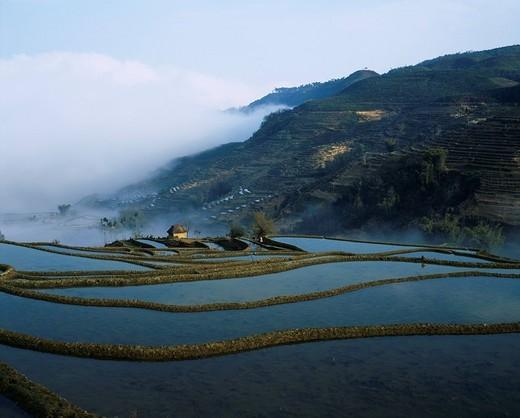 Rice Terrace in morning mist, Yuanyang City, Yunnan Province, China : Stock Photo
