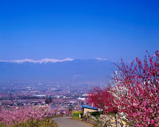 Stock Photo: 4034-29741 Fuefuki City Yamanashi Japan koshin_etsu South Alps Hanamidai