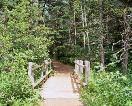 Green Gables Forest of a ghost Cavendish Prince Edward Island Canada : Stock Photo