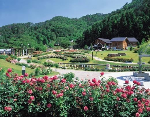 Higashizawa Rose park, Murayama, Yamagata, Japan : Stock Photo