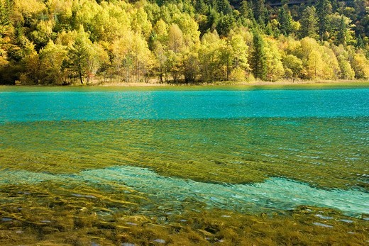 Jiuzhaigou Valley, Five Flower Lake Wuhua Hai, Sichuan, China, Asia, World Heritage : Stock Photo