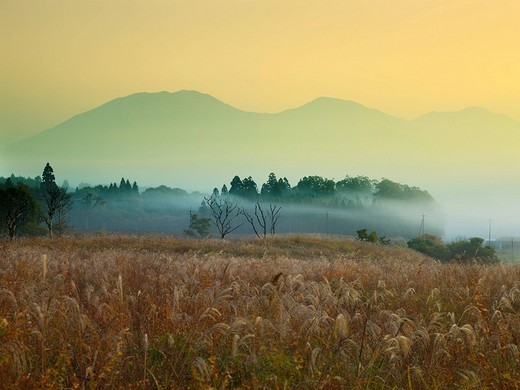 Hiruzen plateau, Hiruzen, Miscanthus sinensis, Morning, Maniwa, Okayama, Japan : Stock Photo