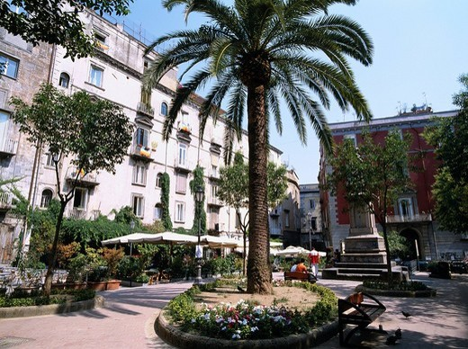 Square, Coconut Palm Tree, Bellini Square, Naples, Italy : Stock Photo