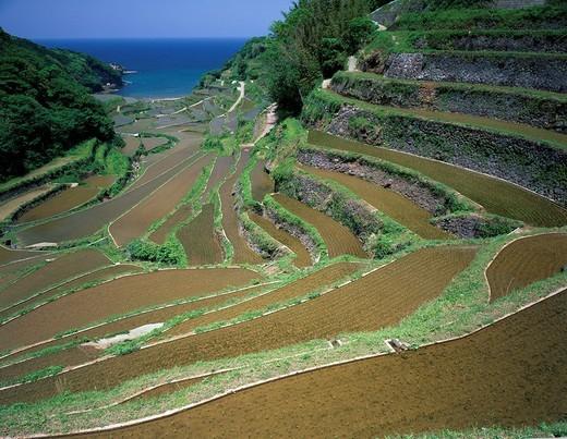 Agriculture, terrace paddy field, Hamanoura, Genkai, Saga, Kyushu, Japan : Stock Photo