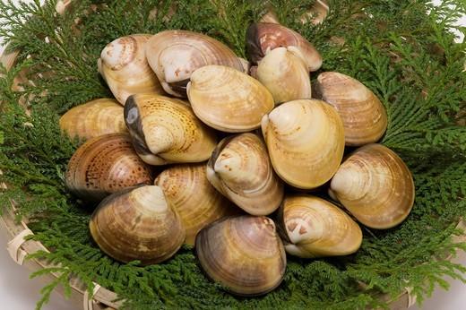 Hamaguri clam shellfish food Japan : Stock Photo
