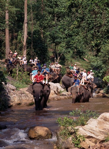 ride on an elephant Elephant camp Chiang Mai Thailand : Stock Photo