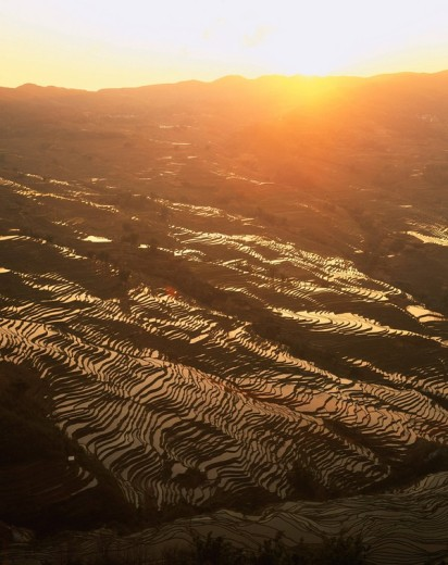 Rice Terrace, Evening View, evening sun, Yuanyang, Yunnan Province, China : Stock Photo