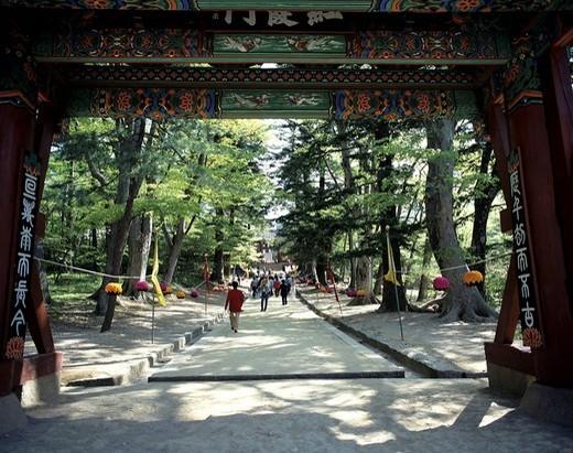 Stock Photo: 4034-41769 Haeinsa Temple South Korea Temple Tree Plant Paper lantern Gate