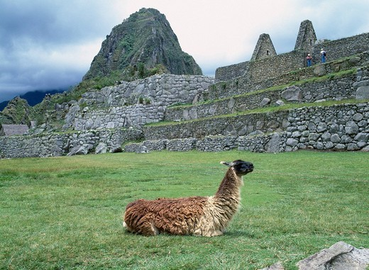 Daiko Advertising place Llama Animal Machu Picchu Peru Rock Mason Clouds : Stock Photo