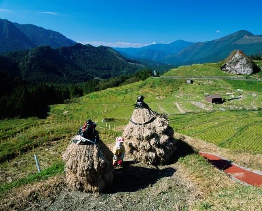 maruyama rice field, agricultural industry, Kumanokodo, Iseji, Kumano, Mie, Japan : Stock Photo