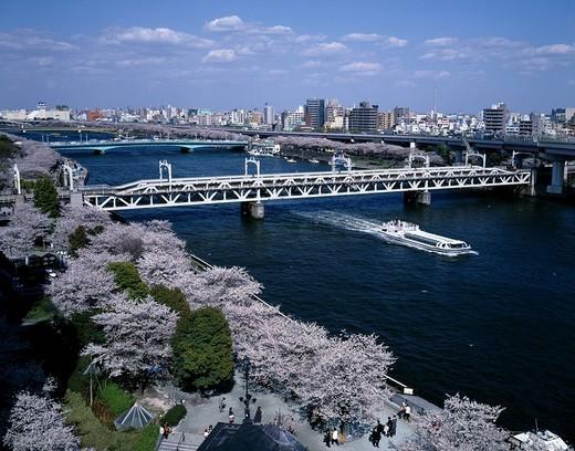 Stock Photo: 4034-48938 Sumida Park Cherry Blossoms Sumida River Tokyo Japan Blue sky Clouds City View Bridge Ship Wake Park Sakura Cherry Blossoms Flower Plant Tree