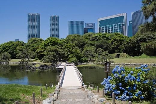 Hamarikyu_teien, Bridge, Shioiri Pond, Hydrangea, Flower, Sio_site, Tokyo, Kanto, Japan : Stock Photo