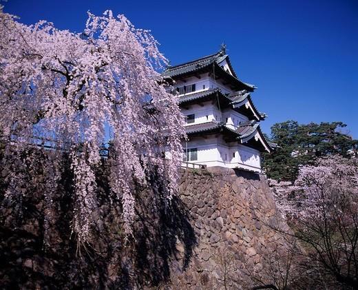 Hirosaki castle Castle weeping cherry tree Cherry Blossoms Hirosaki Aomori Japan Flower Spring flower Plant Castle : Stock Photo