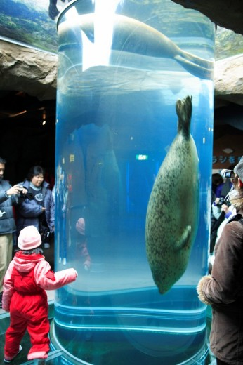 seal pavilion, Asahiyama zoo, Asahikawa, Hokkaido, Japan : Stock Photo