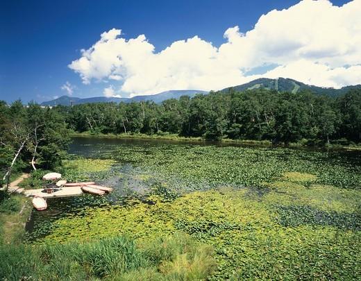 Summer Shiga highland Hasuike Yamanouchi Town Nagano Japan Pond : Stock Photo