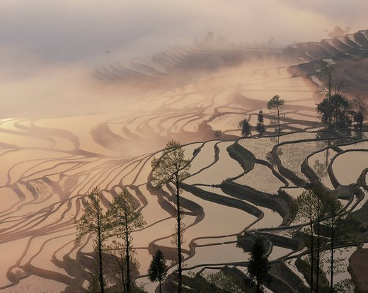 Rice Terrace Morning Sun Yunnan China Industry Agriculture : Stock Photo