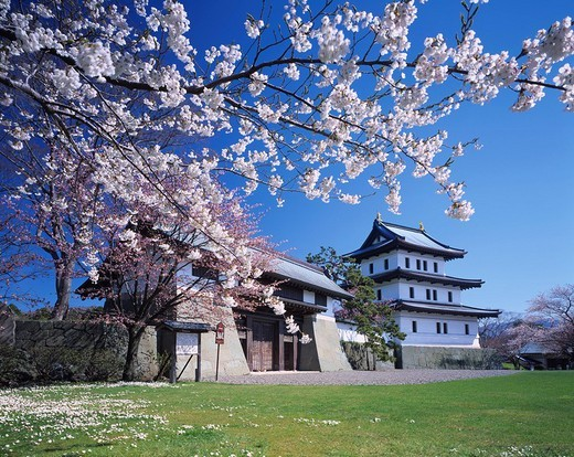 Matsumae castle Cherry Blossoms spring Matsumae Hokkaido Japan Sky Castle Tree Flower Petal Gate Castle gate Pink : Stock Photo