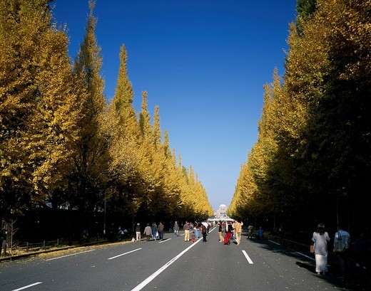 Meiji Shrine Outer Garden Ginkgo roadside trees Tokyo Japan Blue sky Red leaves Roadside trees Road People Tree : Stock Photo