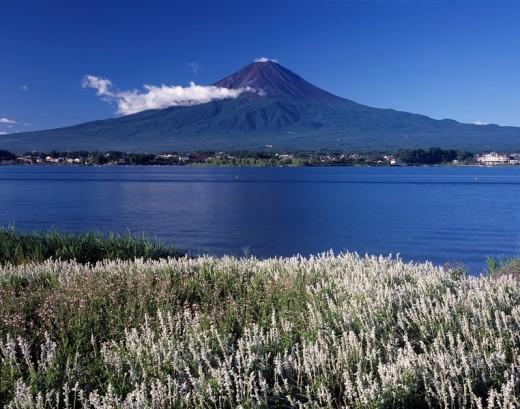 Mountain, Mt Fuji, Kawaguchiko, Kawaguchi, Lake, Flower field, Blue Sky, Cloud, Kawaguchi, Yamanashi, Japan : Stock Photo