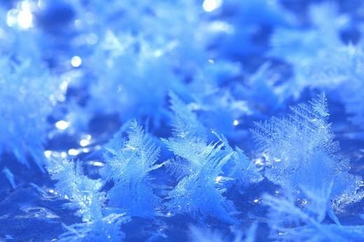 Frost flower, Lake Kussharo, Teshikaga, Hokkaido, Japan : Stock Photo